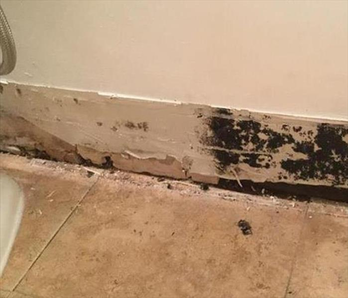removed trim revealing mold growth by floor in a bathroom